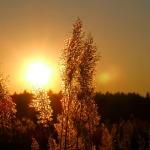 sun-361840_960_720